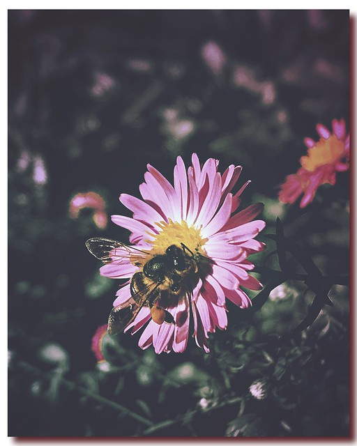 ***bee at work***🐝🌸