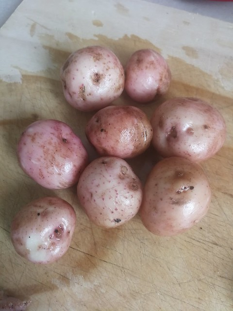 scots potatoes weighing 8.4 kg