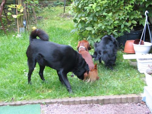 00245.Pinkelpause für Hunde