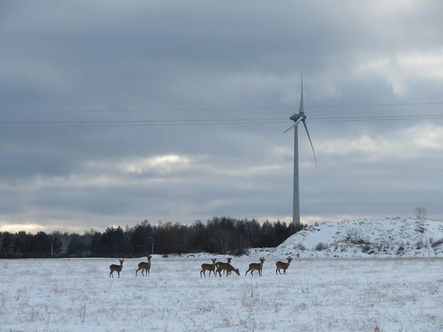 Metsik Lääs / Wild West, Estonia