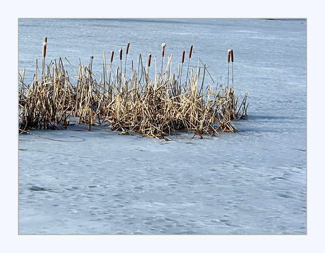 cattails on ice, Canon EOS 1100D, Canon EF-S 18-55mm f/3.5-5.6 III