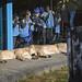<p><a href=&quot;http://www.flickr.com/people/macspud/&quot;>Mac Spud</a> posted a photo:</p>&#xA;&#xA;<p><a href=&quot;http://www.flickr.com/photos/macspud/33253769398/&quot; title=&quot;London Zoo 15-2-19 - 49&quot;><img src=&quot;http://farm8.staticflickr.com/7899/33253769398_0e4b889f57_m.jpg&quot; width=&quot;240&quot; height=&quot;160&quot; alt=&quot;London Zoo 15-2-19 - 49&quot; /></a></p>&#xA;&#xA;