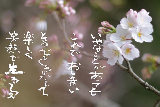 IMG_8171