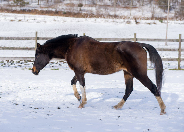 20190122 Horses_6