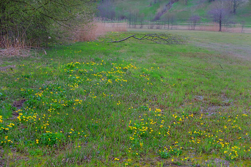 wet meadow in early spring,