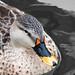 Duckface by WernerKrause