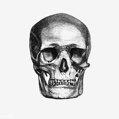 Vintage human skull illustration