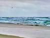 Lone bird and crashing waves