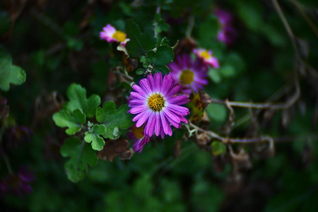 Nikon 1 j5 tv lens 25mm