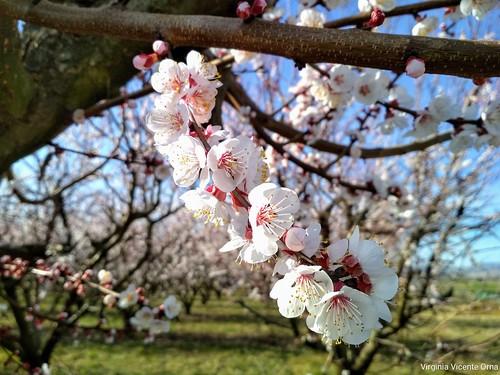 Llego la primavera