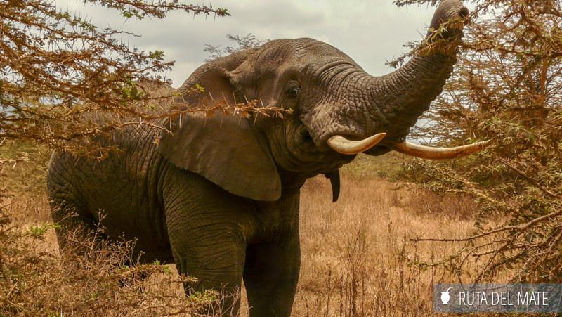 Animales hacer un safari P1110774