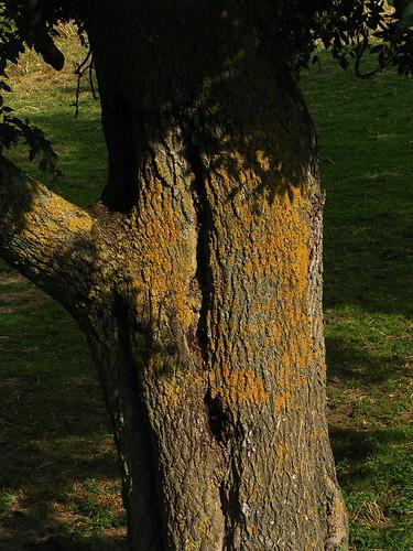 20080831 28873 1001 Jakobus Baum Moos_K