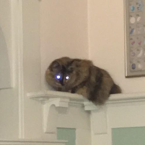 Devil Rat