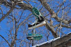 Snow Photos-13