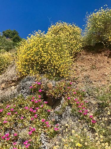 Spanish Spring