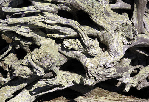 Driftwood at Whiffen Spit, a walk on a spit of land extending out into the Pacific Ocean from Sooke on Vancouver Island, Canada