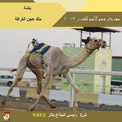صور سباق الجذاع (الأشواط المفتوحة) مهرجان سمو الأمير المفدى صباح 4-4-2019