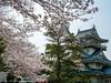 Photo:岩崎城の桜(愛知県日進市) By kzy619