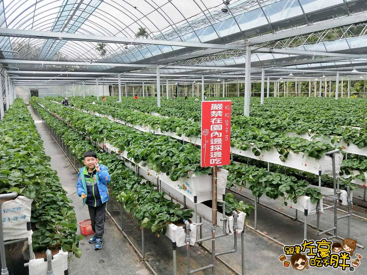 苗栗縣大湖灣潭玫瑰草莓園-28