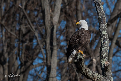 Bald Eagles of New Jersey | 2019 - 5