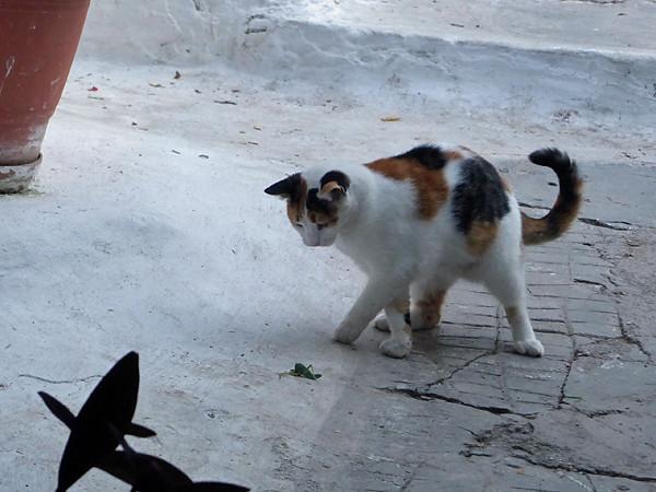 chat et sauterelle