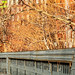 Web High Line 2