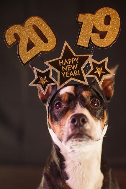New Year 2019-7683