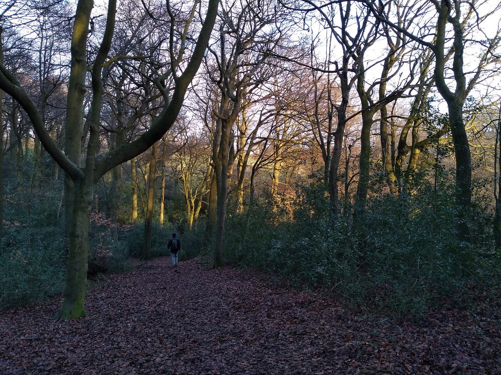Afternoon sun Widmore wood