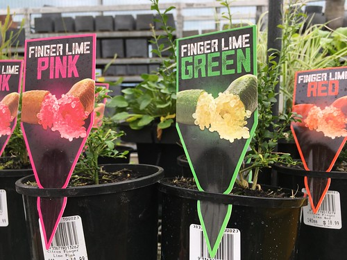 Finger Limes Are All The Rage