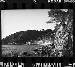 Le pin de Galle, Canonet QL17 GIII - Photo of Toulon
