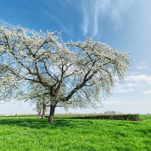 Hesbanian Spring