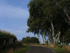 20080910 34497 1011 Jakobus Weg Maisfeld Birken Bäume