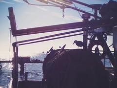 Fischerboot im Hafen - Möve sucht Reste im Netz - 16. Februar 2019 -  Hafen Burgstaaken - Fehmarn - Schleswig-Holstein - Germany