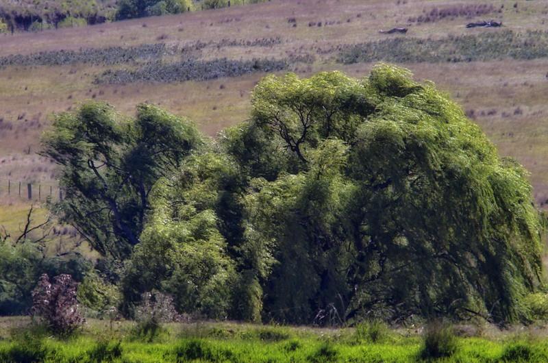 SD 197 Supertele Landscapes 01