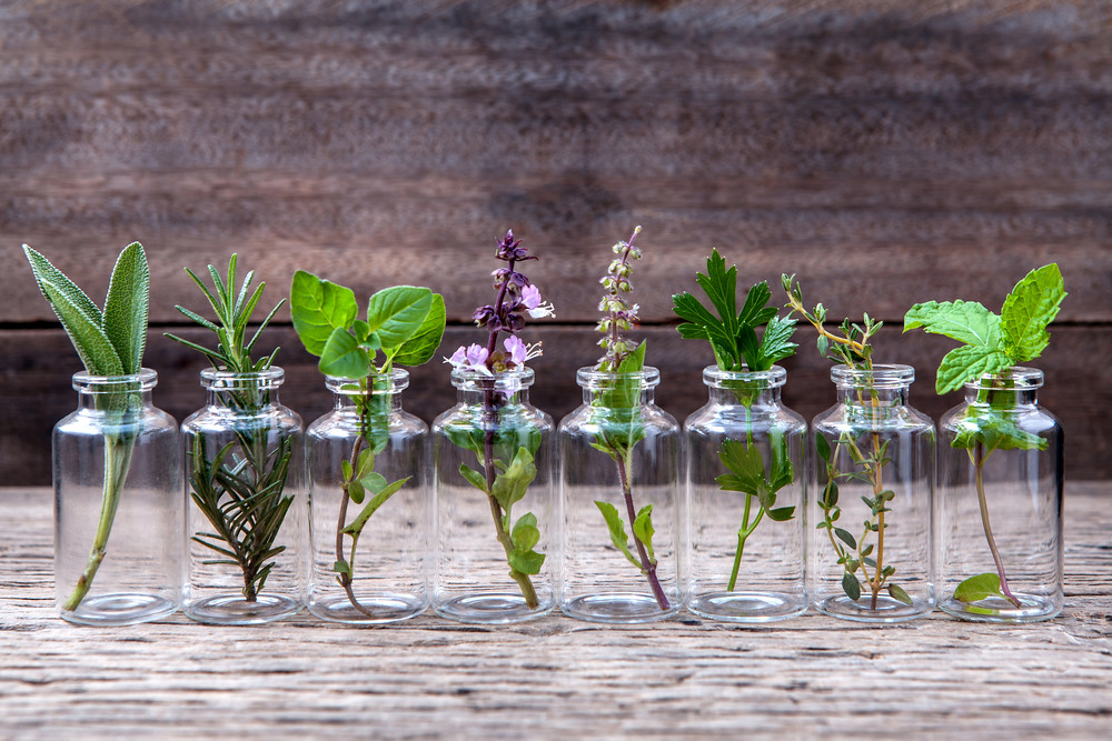 25 Best Herbs You Can Grow In Water