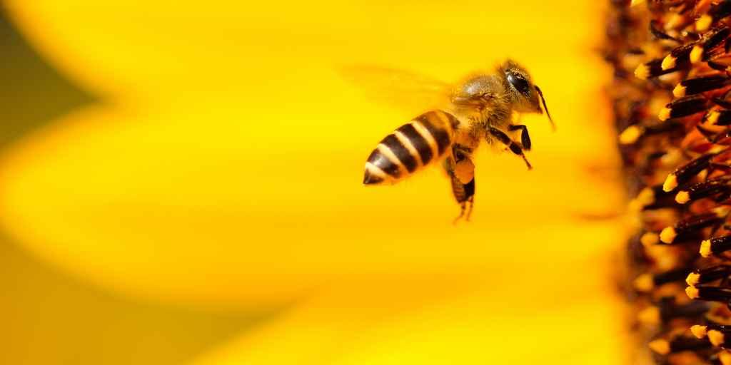 pollution-mesurer-avec-abeilles-air-sols