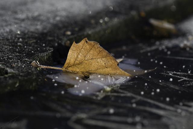 Caught by winter (explored), Canon EOS 6D, Sigma 105mm f/2.8 Macro EX