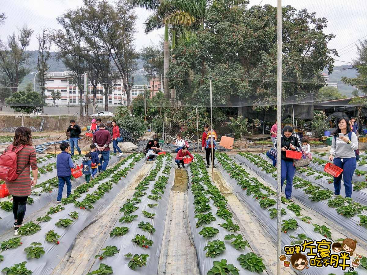 大岡山觀光草莓園-4