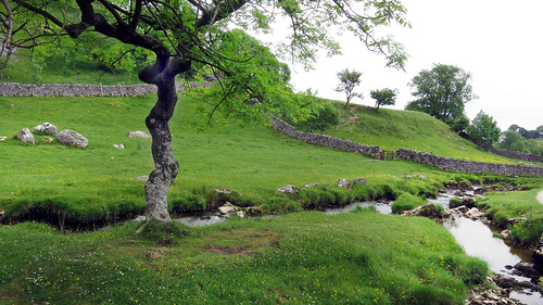 Trees on our Malham walk in the Yorkshire Dales of England