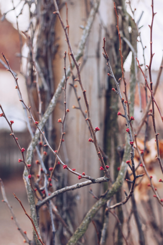 Vårens knoppar - reaktionista.se