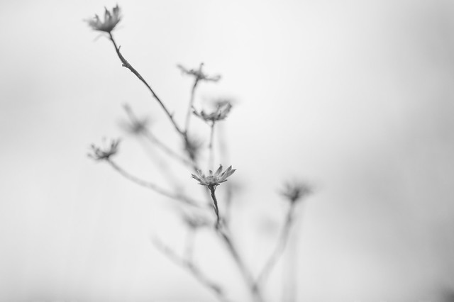 Ghost bouquet