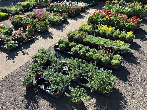 Prêts à être plantés / Pflanzen für Balkon und Garten / Растения для балкона и сада