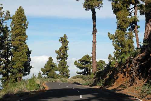 Pine trees on the way down from the crater rim