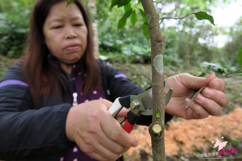 延伸島嶼生命綠 花蓮護樹IMG_5202