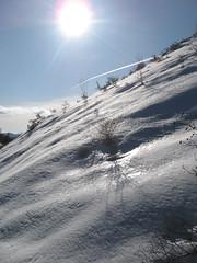 Contre-jour hivernal