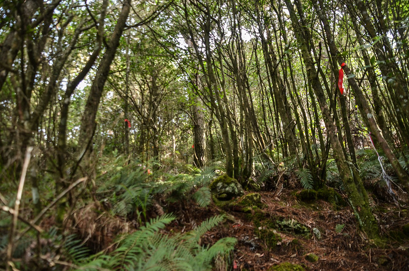 登北三錐山雜木林 1