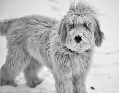 Snowdoodle