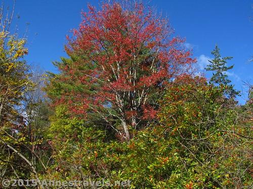 Fall Foliage at Willowwood