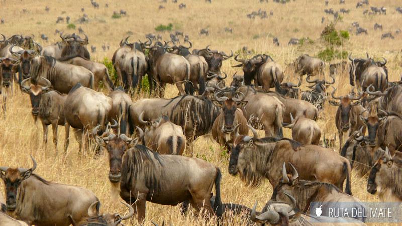 Guia para viajar a Kenia y Tanzania P1100889