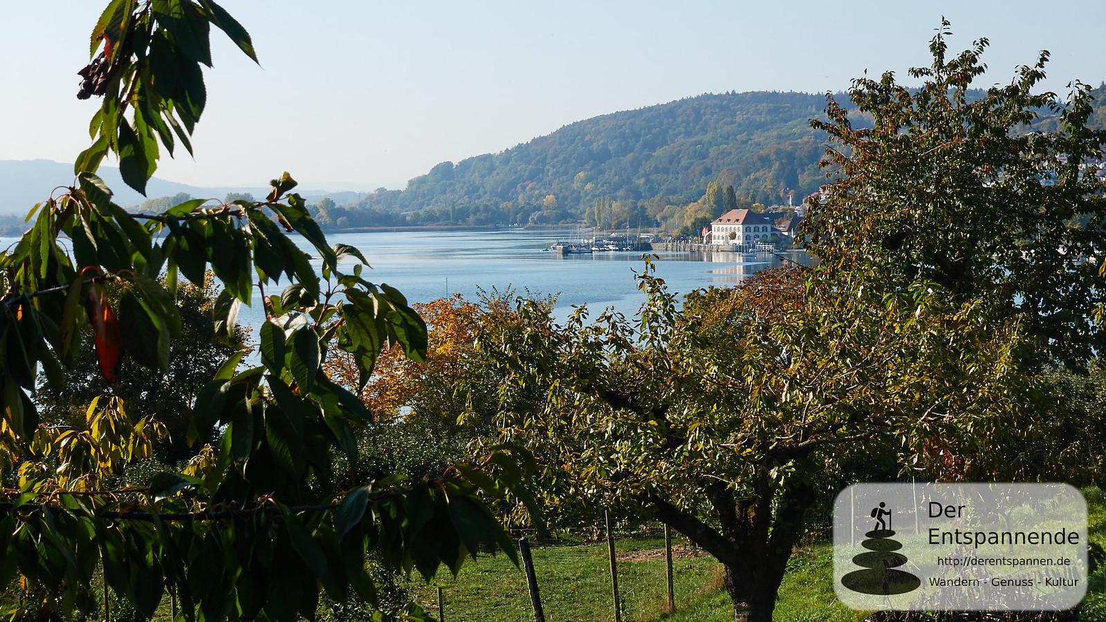 Obstplantagen bei Ludwigshafen am Bodensee